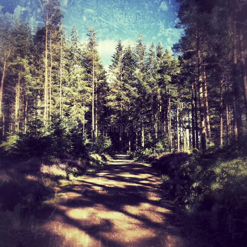 Bosque de Kielder imágenes de archivo libres de regalías