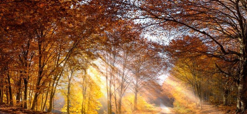 Bosque de la caída con los rayos del sol imagenes de archivo
