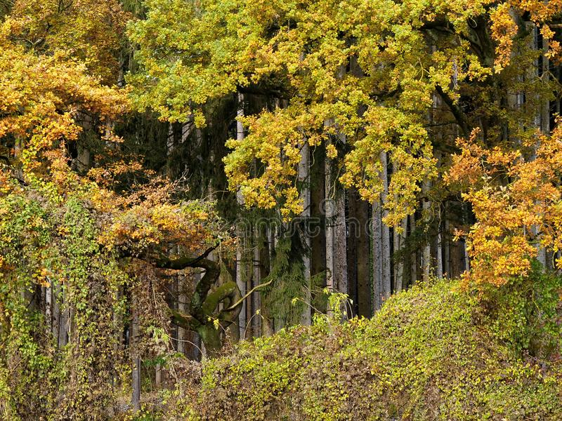 Bosque de la caída en el fondo de la escarpa fotografía de archivo