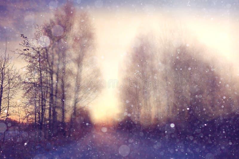 Bosque de la falta de definición del fondo del invierno imagen de archivo libre de regalías