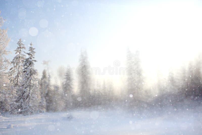 Bosque de la falta de definición del fondo del invierno foto de archivo libre de regalías