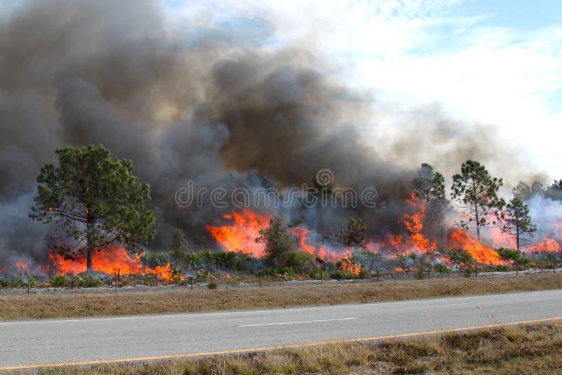 Bosque de la Florida ardiente fotografía de archivo