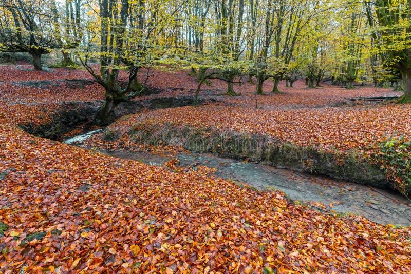 Bosque de la haya de Otzarreta, parque natural de Gorbea, España imagen de archivo