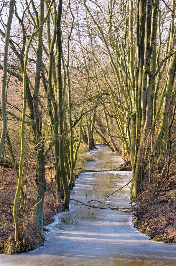 Bosque de la juerga en invierno foto de archivo
