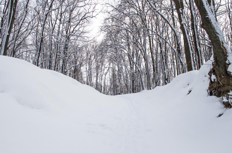 Bosque de la mañana foto de archivo