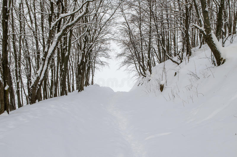 Bosque de la mañana imagen de archivo libre de regalías