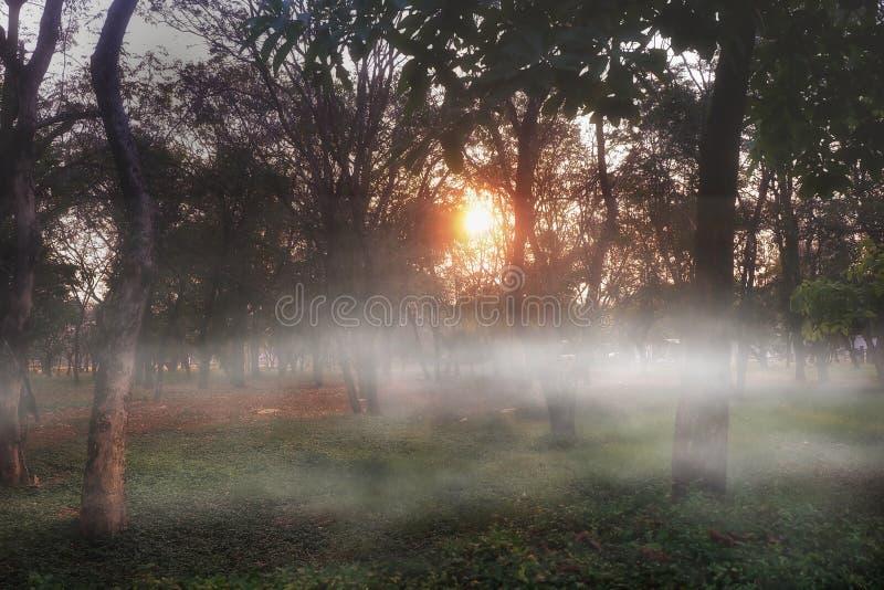 Bosque de la mañana fotos de archivo libres de regalías
