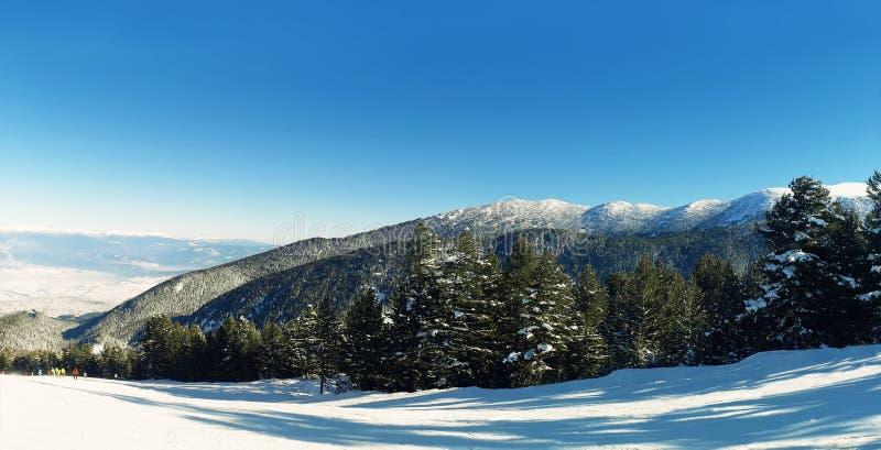 Bosque de la montaña foto de archivo libre de regalías