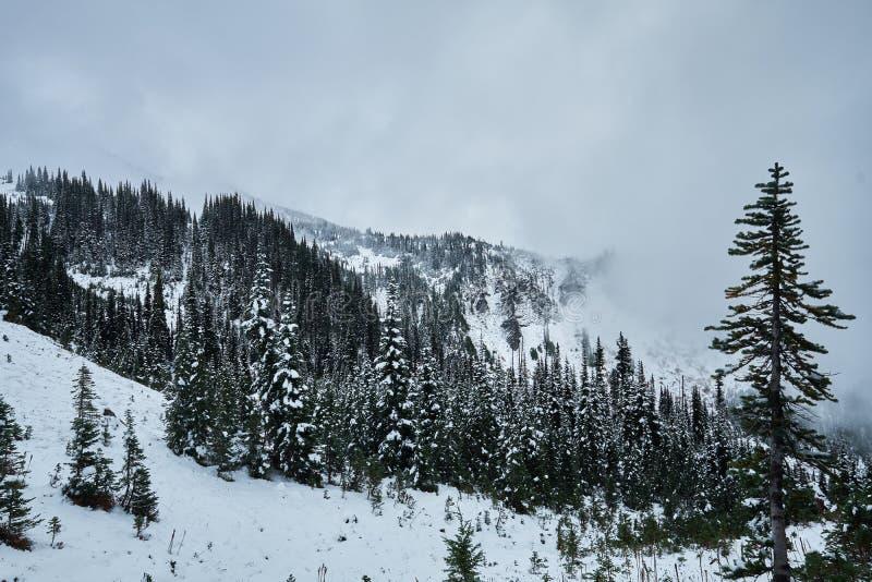 Bosque de la montaña con nieve y niebla del invierno imagen de archivo