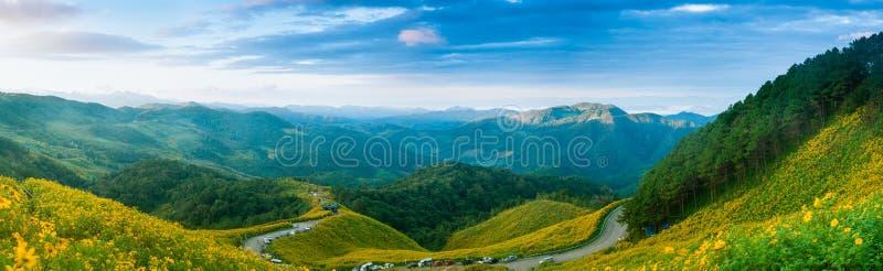Bosque de la montaña del panorama y campo de flor. fotos de archivo libres de regalías