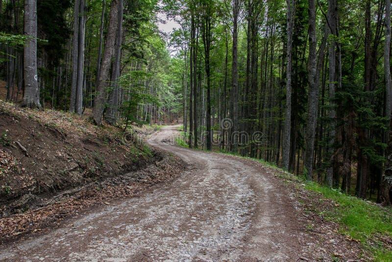 Bosque 2 de la montaña de Gurguiatu fotos de archivo libres de regalías