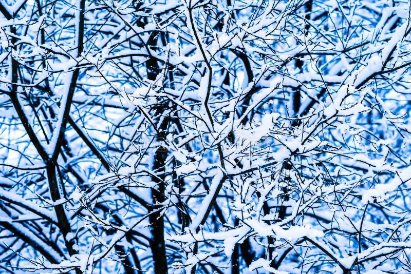 Bosque 11 de la nieve del invierno imágenes de archivo libres de regalías