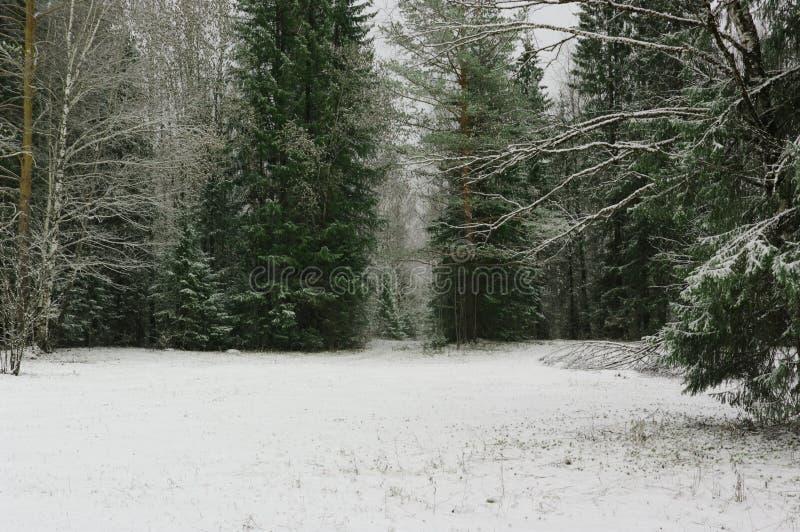 Bosque de la nieve del tiempo de la primavera de la estación foto de archivo libre de regalías
