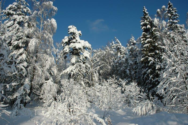 Bosque de la nieve en la sol imagenes de archivo