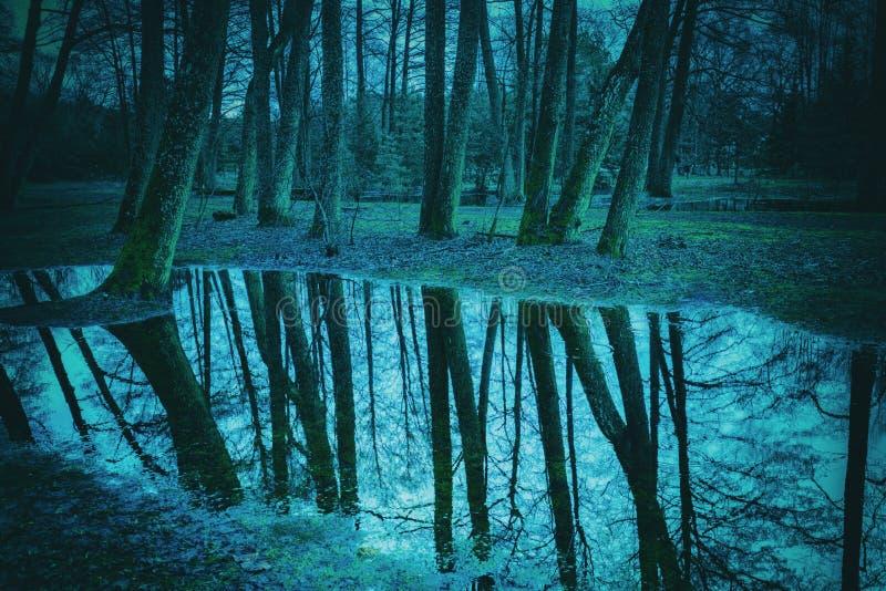 Bosque de la noche en tiempo lluvioso imagenes de archivo