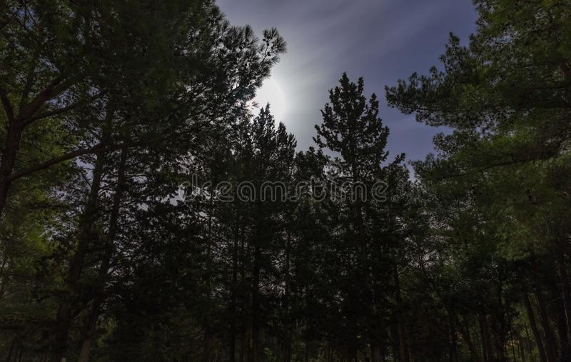 Bosque de la noche teniendo en cuenta una luna enorme cerca del villag de Hanita fotografía de archivo