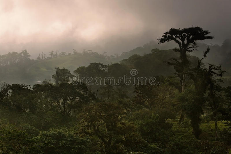 Bosque de la nube de Costa Rica imagen de archivo libre de regalías