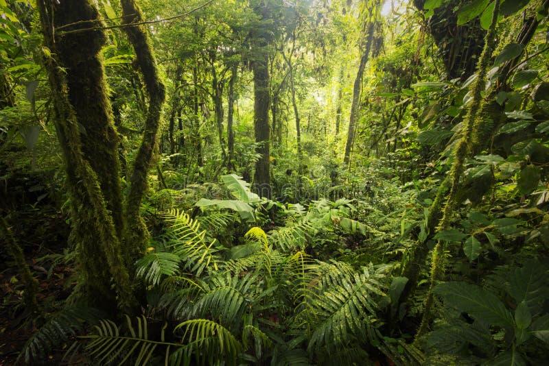 Bosque de la nube de Costa Rica fotografía de archivo
