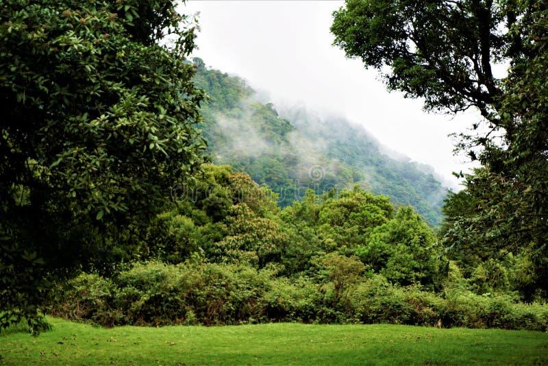 Bosque de la nube en Juan Castro Blanco National Park imagen de archivo libre de regalías
