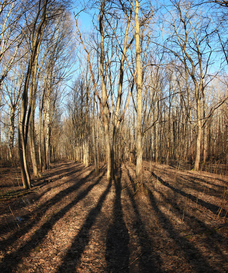 Bosque de la primavera con imagen de archivo libre de regalías