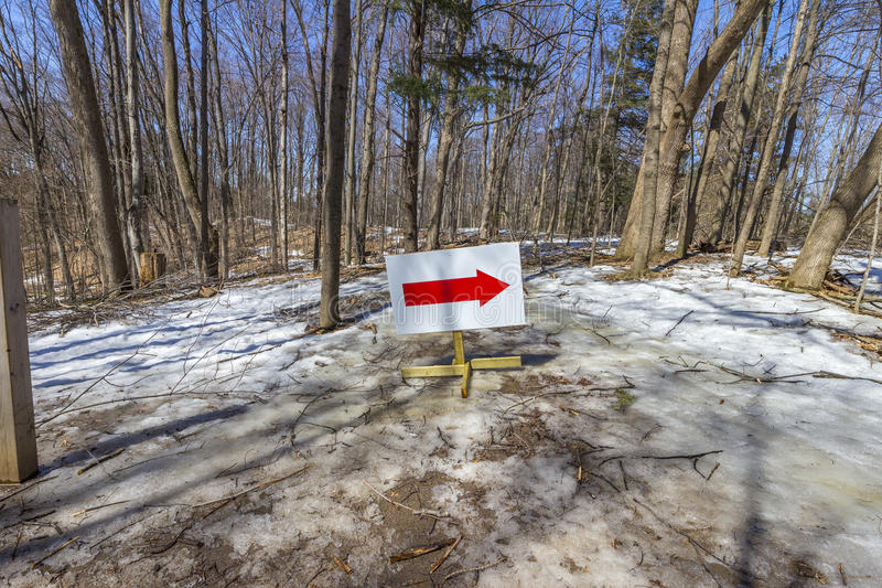 Bosque de la primavera con la muestra roja de la flecha imágenes de archivo libres de regalías