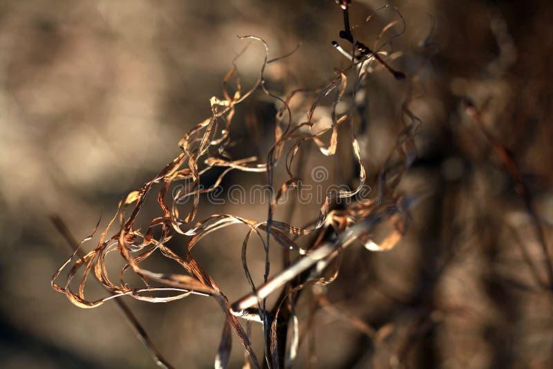 Bosque de la primavera sin las hojas imágenes de archivo libres de regalías