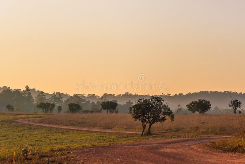 Bosque de la sabana en el tiempo de la puesta del sol foto de archivo libre de regalías