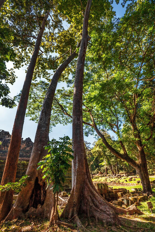Bosque de la selva en Angkor Wat Area imagenes de archivo