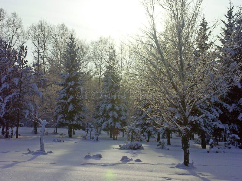 Bosque de la tarde foto de archivo