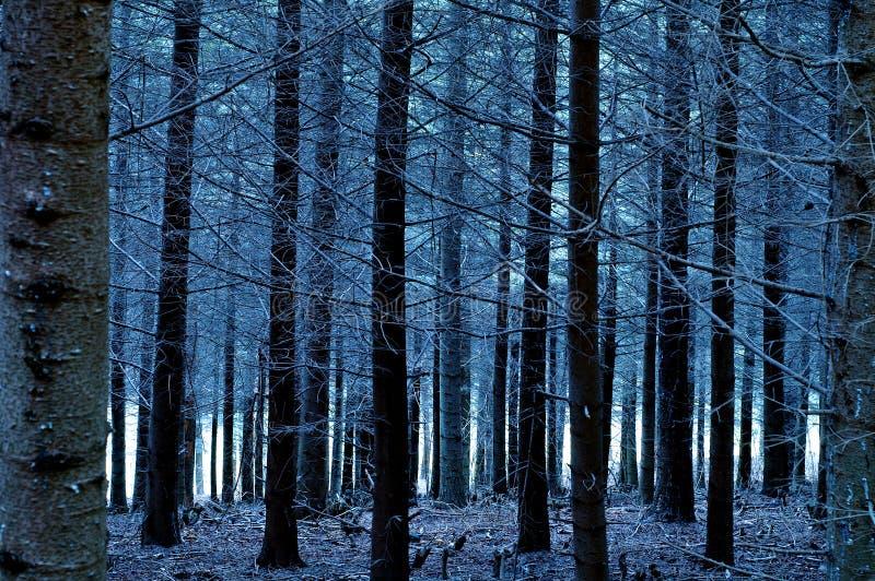 Bosque De Los Azules Imagenes de archivo
