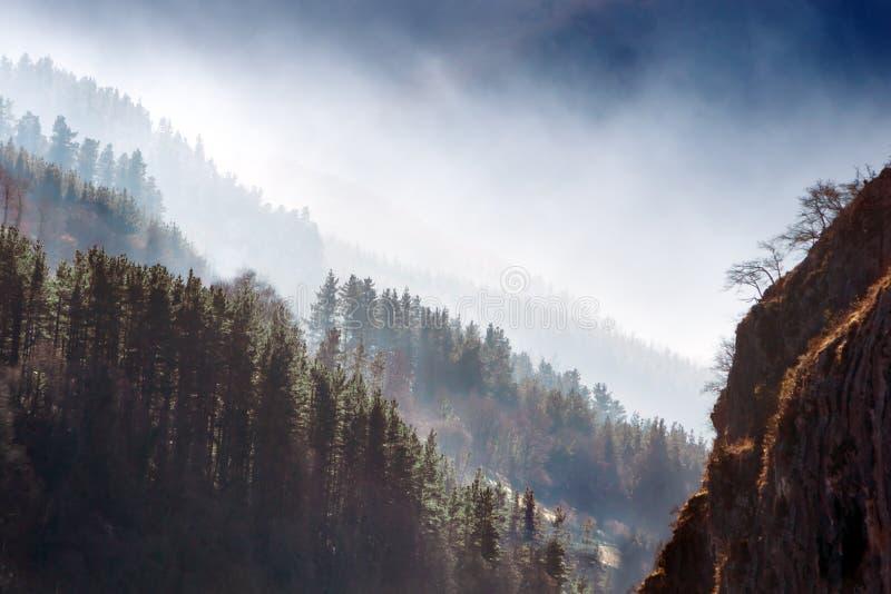 Bosque de los pinos con niebla imagenes de archivo