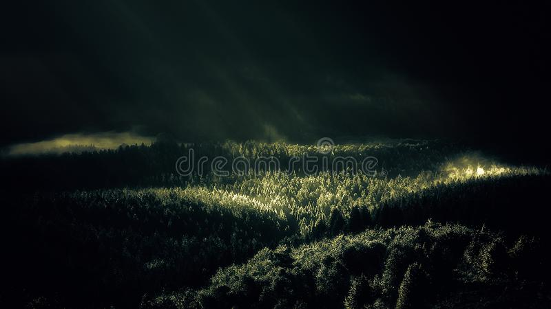Bosque de niebla con los rayos del sol en la mañana fotografía de archivo