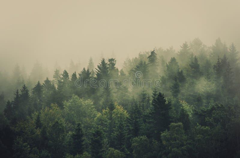Bosque de niebla del verano imagenes de archivo