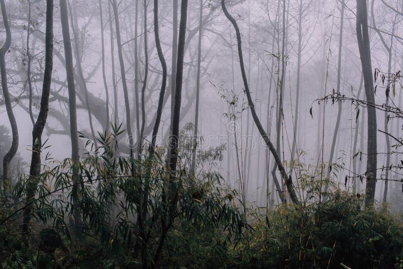 Bosque de niebla en las montañas de Nepal después de la lluvia imagen de archivo
