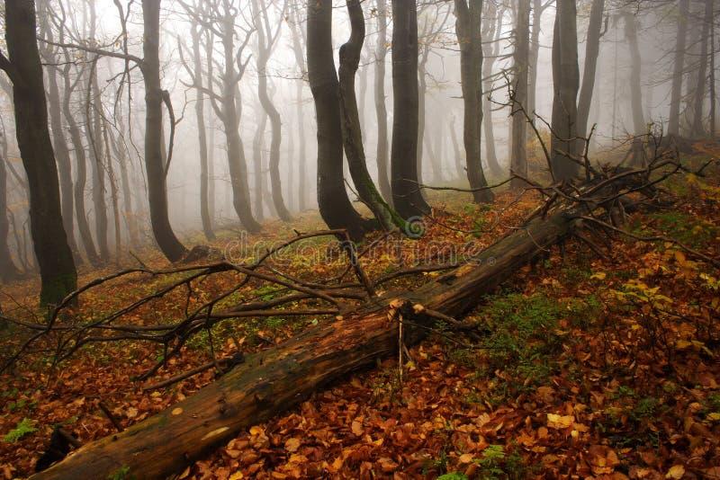 Bosque De Niebla En Montañas Gigantes Fotografía De Archivo Gratis