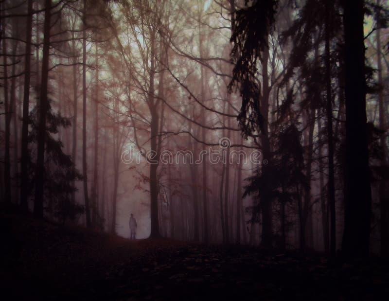 Bosque de niebla espeluznante oscuro fotografía de archivo libre de regalías