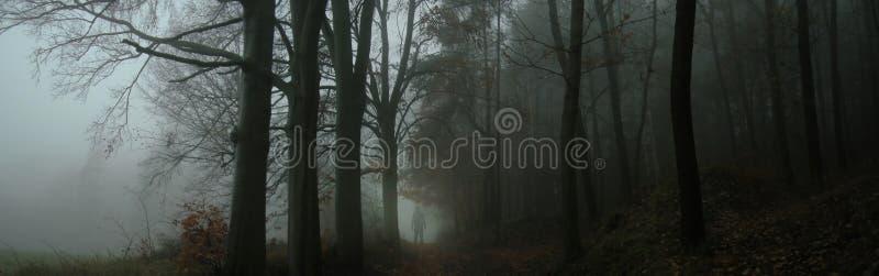 Bosque de niebla espeluznante oscuro foto de archivo