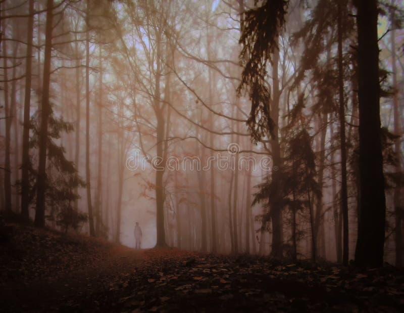Bosque de niebla espeluznante oscuro imagen de archivo libre de regalías
