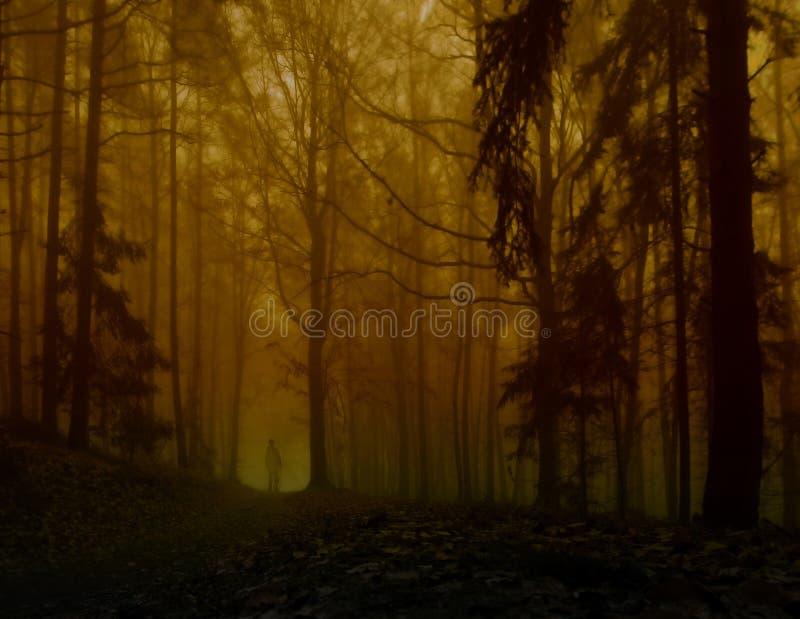 Bosque de niebla espeluznante oscuro foto de archivo libre de regalías