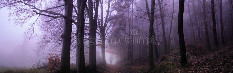 Bosque de niebla espeluznante oscuro imagen de archivo
