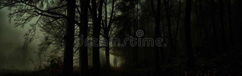 Bosque de niebla espeluznante oscuro imagenes de archivo