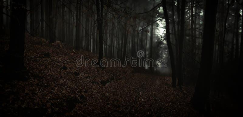 Bosque de niebla espeluznante oscuro de la haya fotografía de archivo libre de regalías