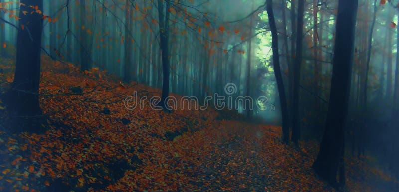 Bosque de niebla espeluznante oscuro de la haya imagen de archivo libre de regalías