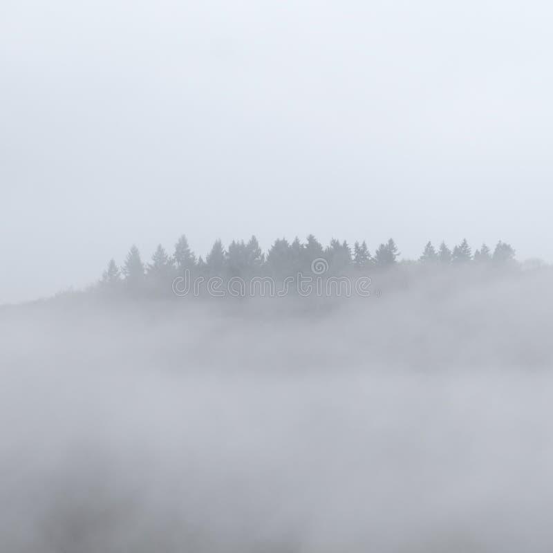Bosque de niebla flotante sobrenatural imagenes de archivo