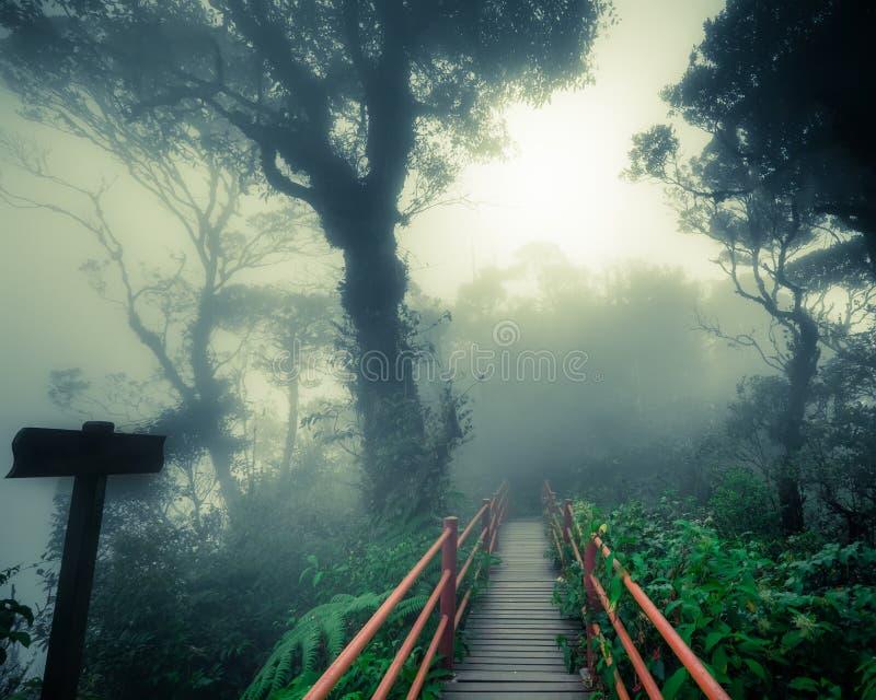 Bosque de niebla misterioso con el puente de madera y el poste indicador imagenes de archivo