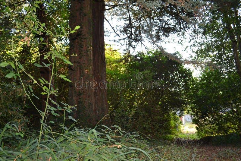 Bosque de Normandía fotografía de archivo