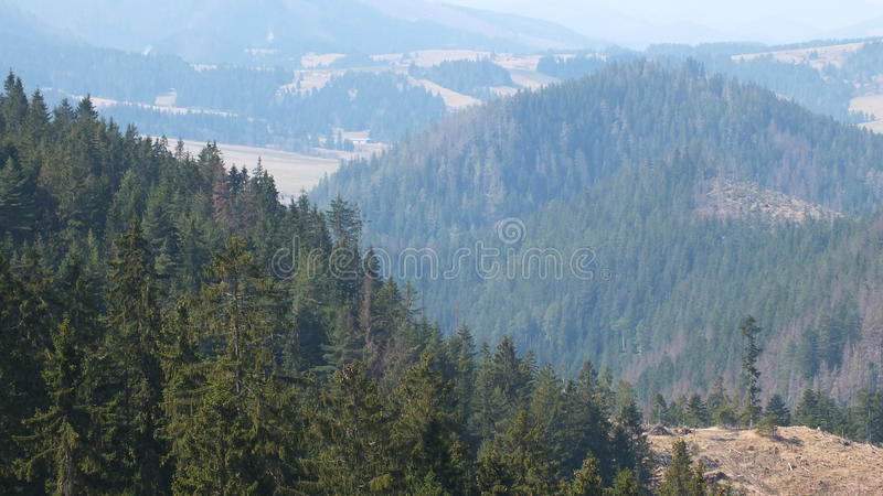 Bosque de Orava foto de archivo libre de regalías