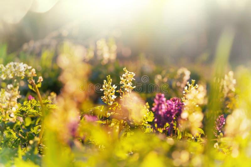 Bosque de primavera fotos de archivo libres de regalías