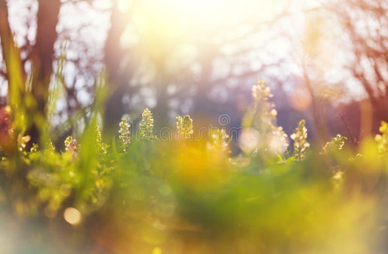 Bosque de primavera foto de archivo libre de regalías