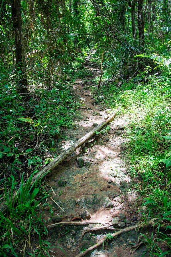 Bosque de Saraburee fotografía de archivo libre de regalías